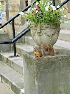 Centreville Squirrel