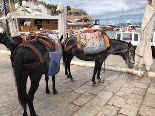 Ydra Donkeys