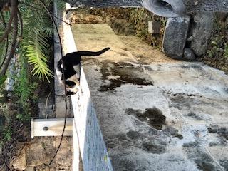 Stoa Cat
