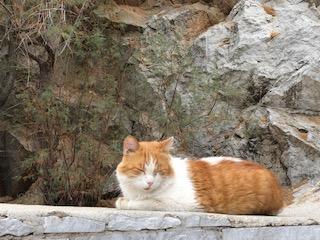 Ydra cat